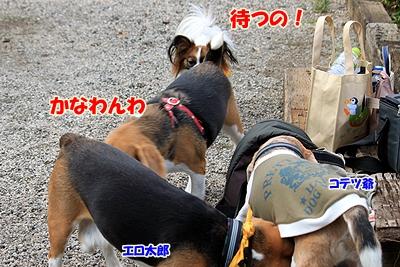 3_20101106190111.jpg