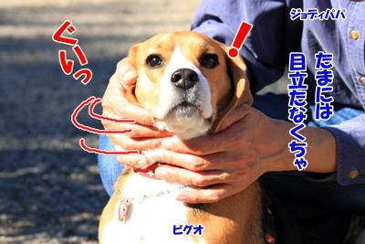 3_20101107230444.jpg