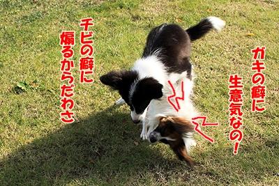 3_20101110223716.jpg