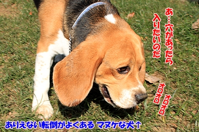 3_20101111235409.jpg