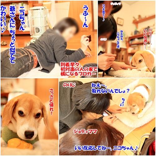 3_20101125230341.jpg