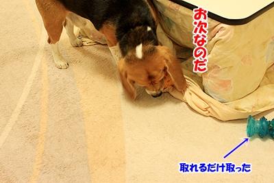 3_20101126214221.jpg