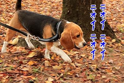 3_20101129213014.jpg