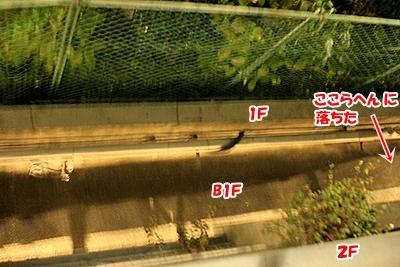 3_20101130190054.jpg
