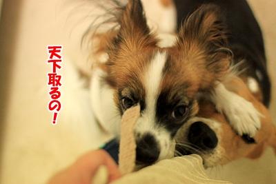 3_20101205011445.jpg