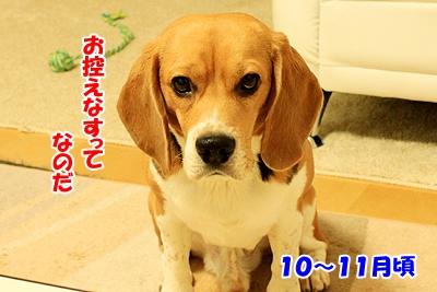 3_20101205194948.jpg