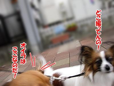 3_20101221232419.jpg