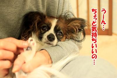 3_20110107150309.jpg