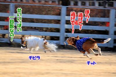 3_20110112214432.jpg