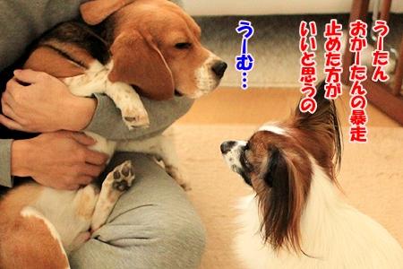 3_20110119210650.jpg