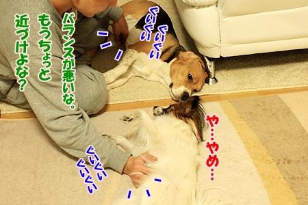 3_20110120204414.jpg
