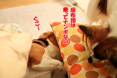 3_20110125203306.jpg