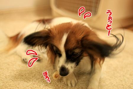 3_20110126220853.jpg