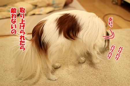 3_20110129174649.jpg