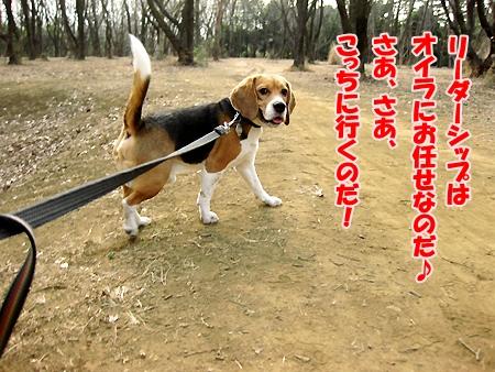 3_20110208200847.jpg