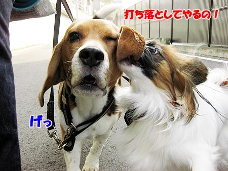 3_20110209012416.jpg