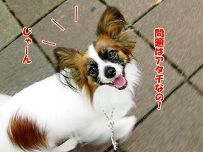 4_20100926174938.jpg