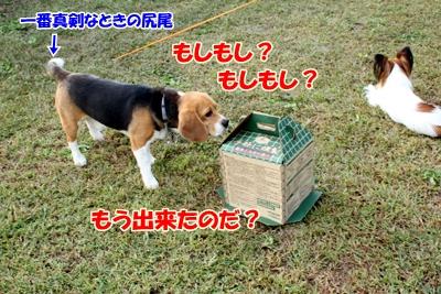 4_20101018232655.jpg