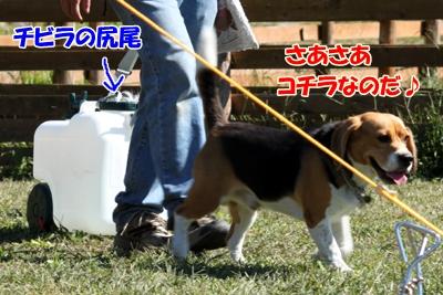 4_20101021095904.jpg