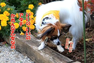 4_20101104205826.jpg