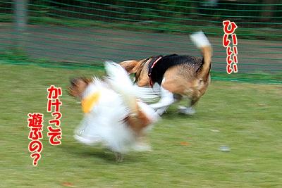 4_20101106190054.jpg