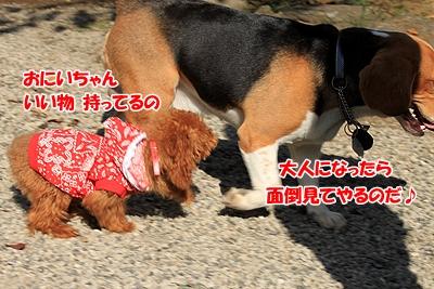 4_20101112221213.jpg