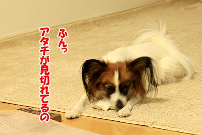 4_20101210202552.jpg