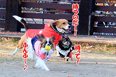 4_20101213102509.jpg