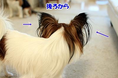 4_20110108181221.jpg