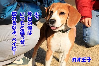 4_20110110021216.jpg
