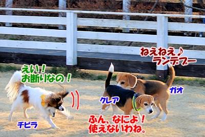 4_20110111221732.jpg
