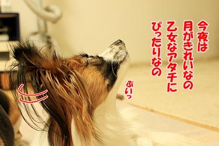 4_20110128212216.jpg