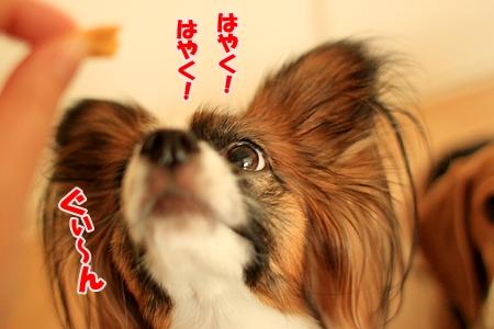 4_20110203230343.jpg