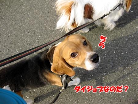 4_20110208200847.jpg