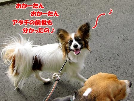 4_20110209012415.jpg