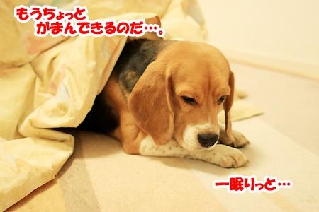 4_20110212015359.jpg