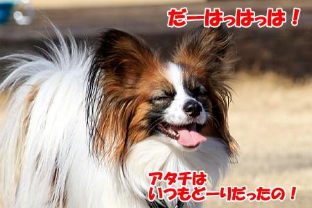4_20110214212219.jpg