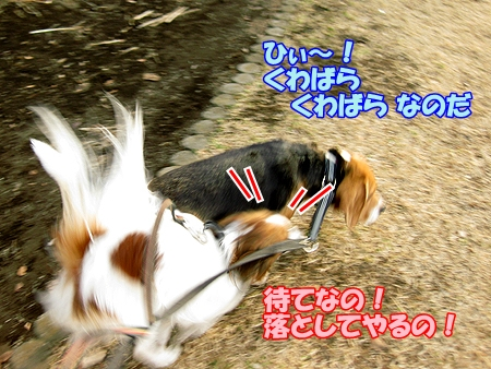 4_20110221212711.jpg
