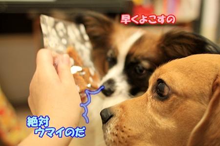 4_20110223200242.jpg