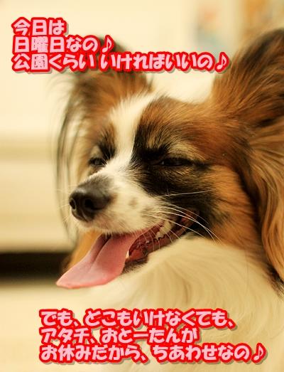 4_20110306004112.jpg
