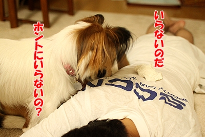 5_20100911104034.jpg