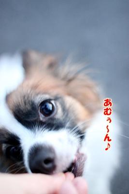 5_20100927202553.jpg