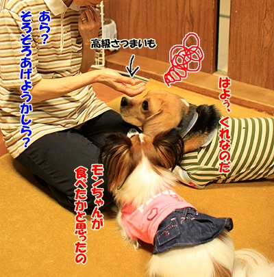 5_20101028210314.jpg