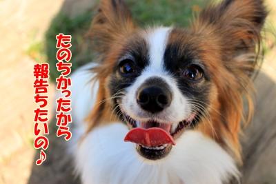5_20101108212009.jpg