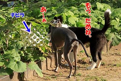 5_20101110223714.jpg