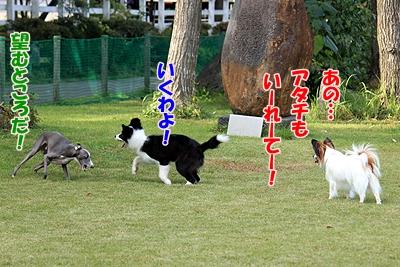 5_20101111235407.jpg
