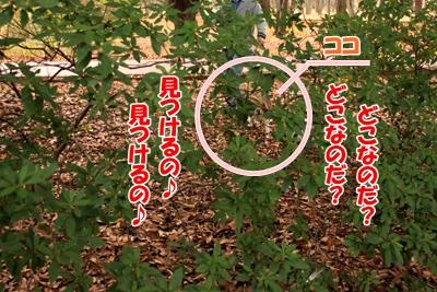 5_20101116211751.jpg