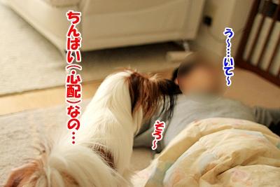5_20101208182327.jpg