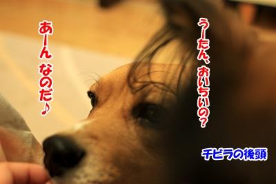 5_20101227222505.jpg