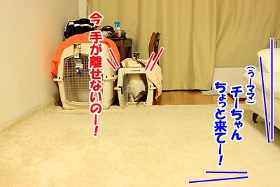 5_20110107150309.jpg
